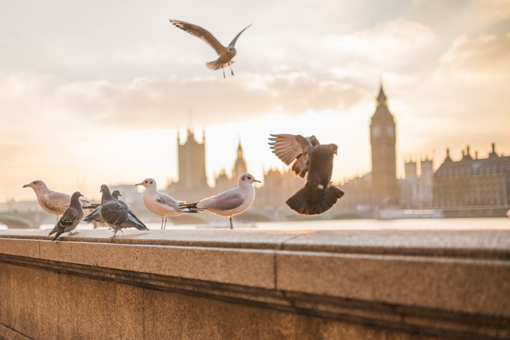 Sunshine and birds flying over the Thames River in London
